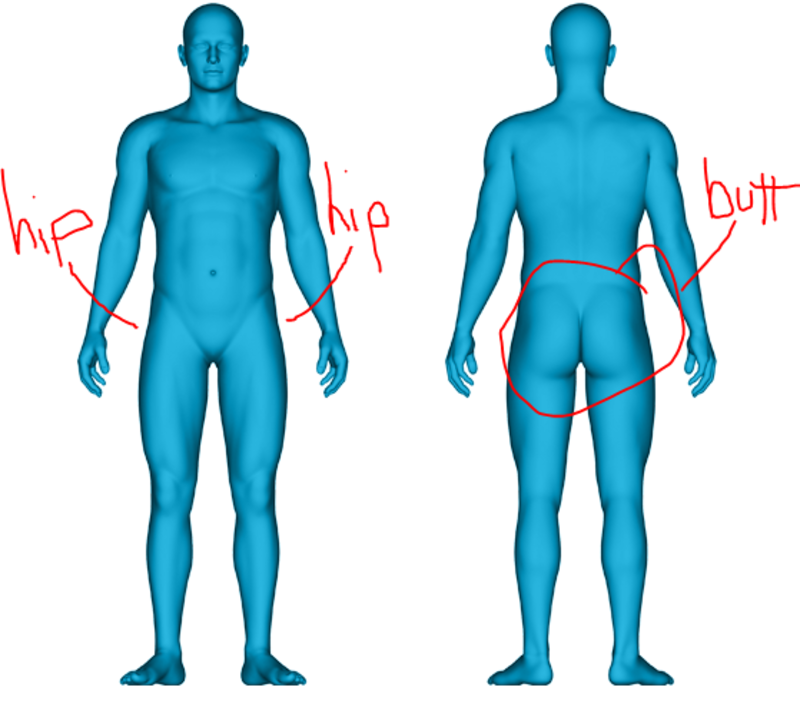 What is the difference between hip and buttocks ? | HiNative