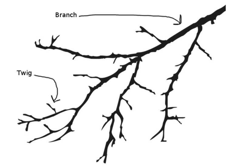 Qual é A Diferença Entre Twig E Branch Hinative